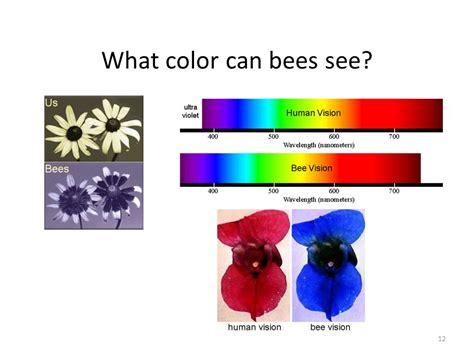 Let's Talk Bees  Ppt Video Online Download