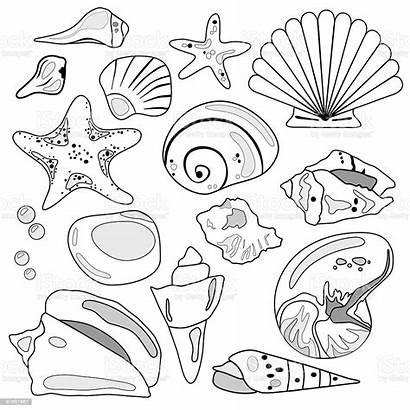 Shell Sea Illustration Drawing Abalone Vector Shells