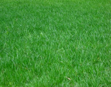 Lawn Care Maintenance Involves A Wide Range Of