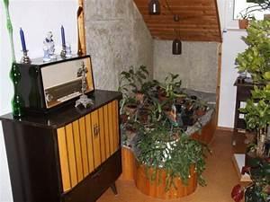 Zimmerpflanzen Für Dunkle Ecken : fragen an den meister pflanzen f r dunkle ecken ~ Michelbontemps.com Haus und Dekorationen