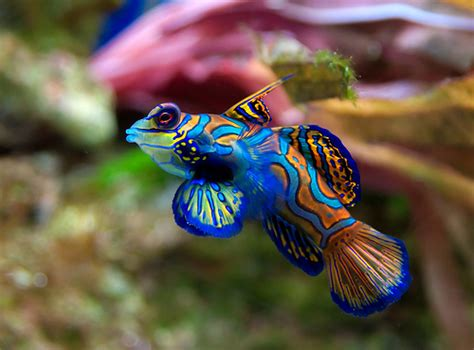 fish  tips life spans