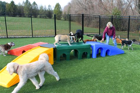 dog daycare duffy s bed and biscuit llc