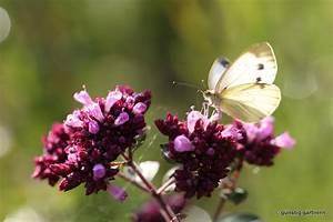 Heimische Pflanzen Für Den Garten : heimische pflanzen f r den garten von elke schwarzer ~ Michelbontemps.com Haus und Dekorationen