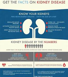 Can The Kidney Repair Itself
