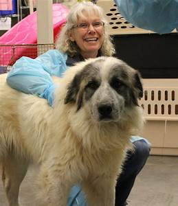 Dogs at overburdened north Texas shelter a