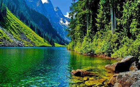 nature landscape clear mountain river stone pine forest  mountainous peaks desktop wallpaper hd  wallpaperscom