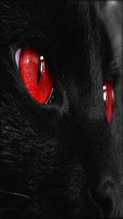 Iphone Cat Eyes Wallpapers Backgrounds Wiki Pixelstalk