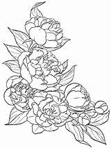 Coloring Flower Peony Flowers Colors Recommended sketch template