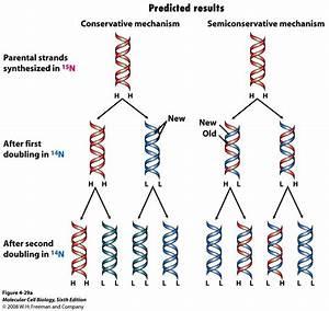 10/24 DNA Replication at University of Arkansas ...
