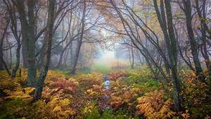 Forest, Magical, Colors, In, Autumn, Trondheim, Norway, Landscape