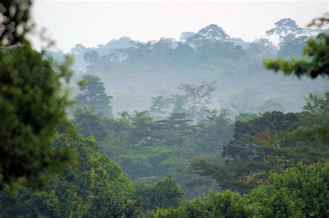File:Forests and Woodlands, Ashanti region, South Ghana ...