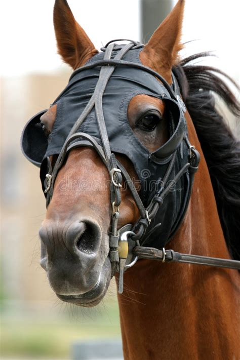 horse racing stock image image  race equine blinders