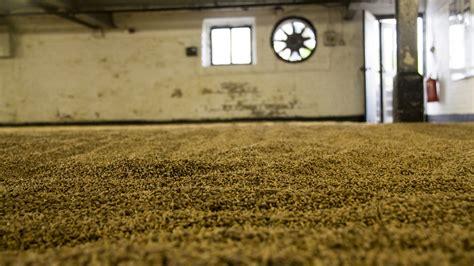 barley grain spread    malting floor  dry flickr