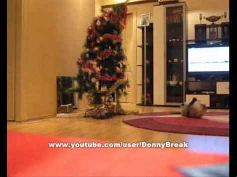 funny cat knocks  christmas tree youtube