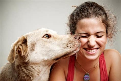dogs    smell  blood sugar