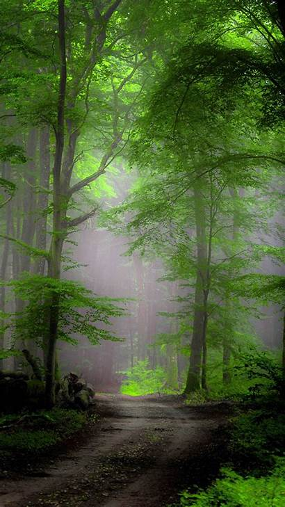 Iphone Wallpapers Forest Morning Mist