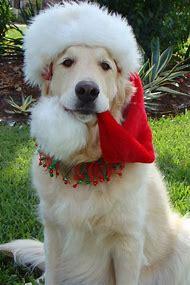 Christmas Golden Retriever Dog