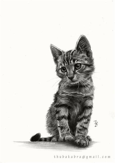 images  cat drawing  pinterest cat