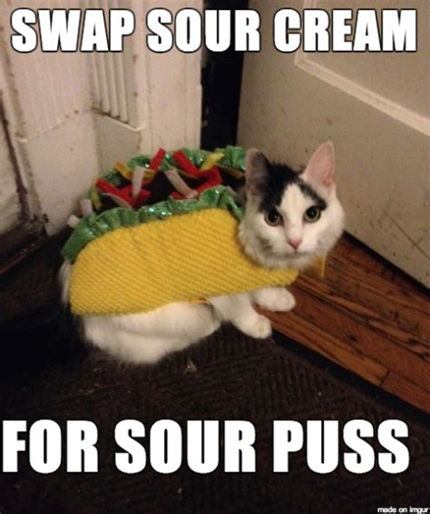 Halloween Cat Meme - humiliate your cat with the 10 most ridiculous costumes for halloween trendeezy com