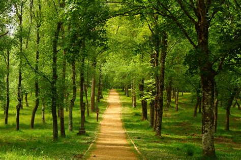 Trees,spain, Country Trail, Colourful, Urkiola, Basque