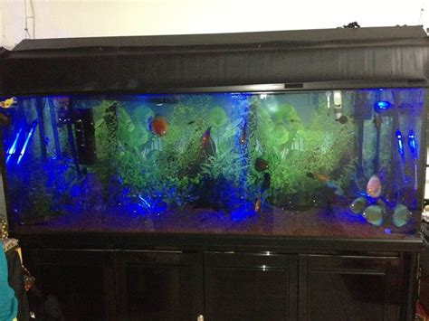why is my fish tank cloudy betta fish tank is cloudy why is my water cloudy p1280283 2017 fish tank maintenance