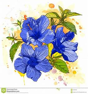 Watercolor Paint - Hibiscus Flower Royalty Free Stock
