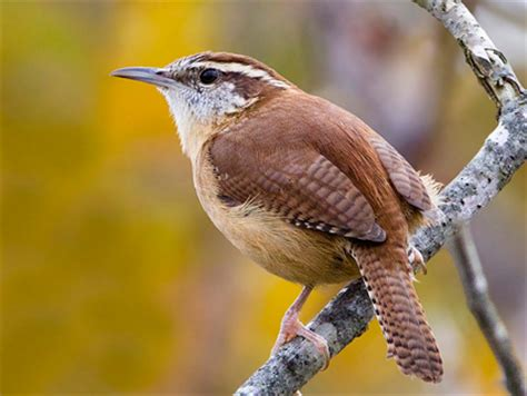 belle grove plantation bird watching
