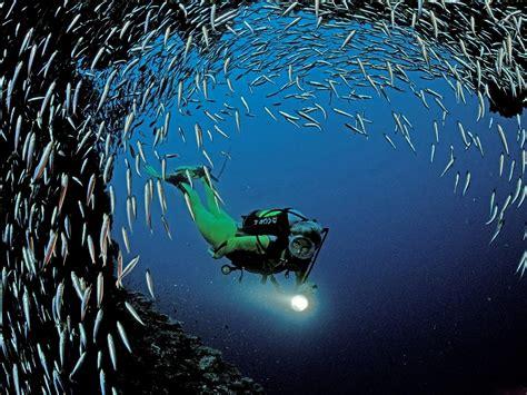 beautiful small fish  sea world hd wallpapers hd