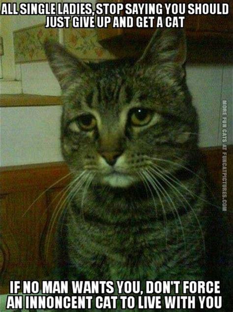 Cat Meme Ladies - crazy cat lady fun cat pictures