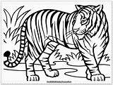 Tiger Coloring Pages Realistic Printable Tigers Sheets sketch template