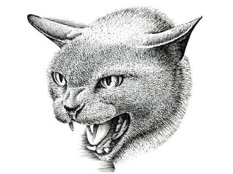 draw  cat