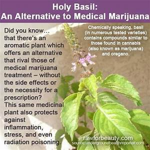 Holy Basil For Anxiety Side Effects