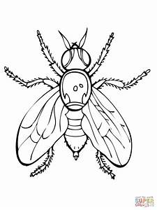 Fruit Fly Coloring Online | Super Coloring