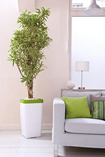 houseplants green air filters  bright accents