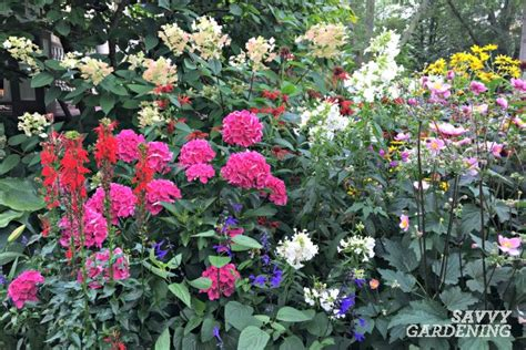 A List Of Cottage Garden Plants; The Ultimate Guide