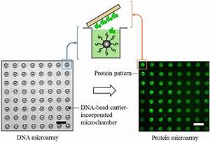 Dna Microarray Microarrays Free Full Text Microintaglio Printing For