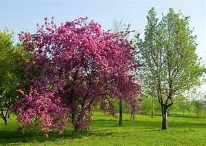 Rosa Blühender Baum Im Frühling : bl hender pflaumenbaum stock foto colourbox ~ Lizthompson.info Haus und Dekorationen