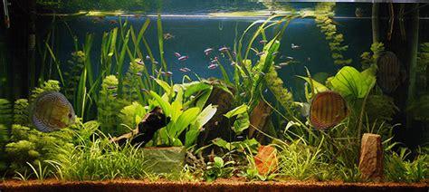 les plantes d aquariums un monde fascinant jardins de