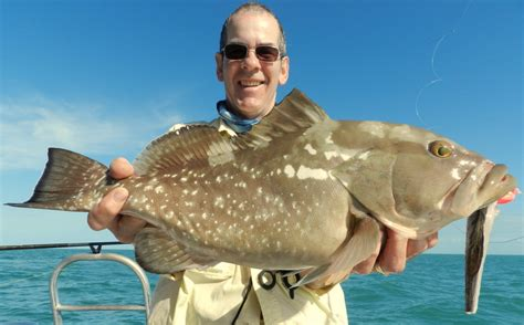 grouper lucky fish eating