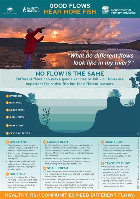 fish  flows