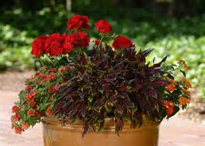 refresh containers with cool fall flowers and foliage