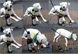 Nikotin Von Fensterscheiben Entfernen : so kommt man vor die hunde also finer weg von alkohol und nikotin o foto bild tiere ~ Markanthonyermac.com Haus und Dekorationen