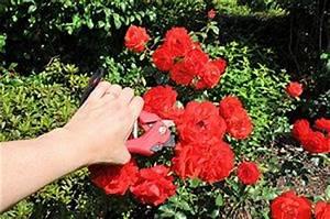 Rosen Schneiden Zeitpunkt : rosen schneiden anleitung zeitpunkt ~ Frokenaadalensverden.com Haus und Dekorationen