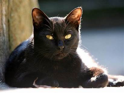 Cat Eyes Yellow Wallpapers Backgrounds Tag Strictly