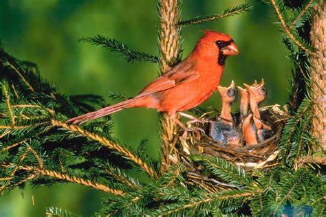 what are song birds backyard bird world backyard bird