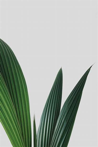Minimal Plants Interior Interiors Todays Everywhere Traveller