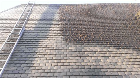roof cleaning services moss removal roof washing uk