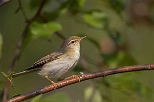 Kleine Vögel Im Garten : v gel ~ Lizthompson.info Haus und Dekorationen