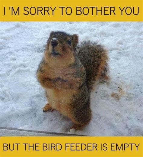 If so, this is the place for you! Pin by Builditgirl ~ on HUMOR (no pin limits)   Squirrel ...