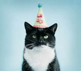 cat birthday cat birthday make2fun